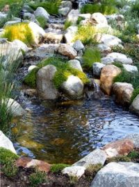 Backyard waterfalls, water garden, koi pond and streams ...