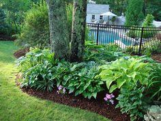 Shade Garden For Backyard Foundation? Ostrich Ferns Hosta