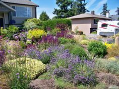 1000 drought landscaping