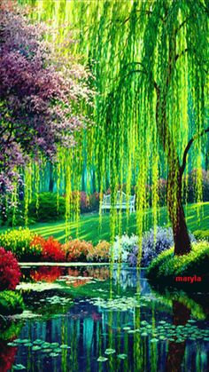 Cell Phone Fall Wallpaper 1000 Images About Willow Trees My Favorite On