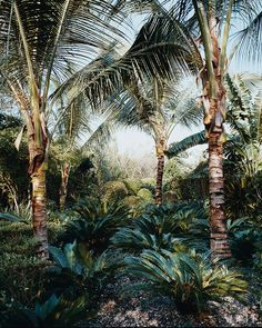 Tropical Garden My House Pinterest Gardens Tropical And