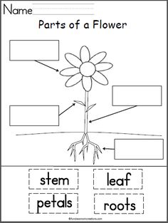 Worm Activities FREEBIE from KiddosConnect on
