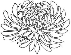 Chrysanthemums, Drawings and Search on Pinterest