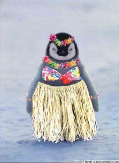 just me penguins passion