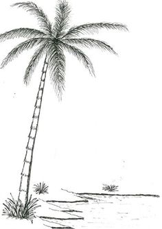 Let's draw palm trees. Great Guide. Easy to follow process