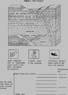 Fossils: Fossils Graphic Organizer