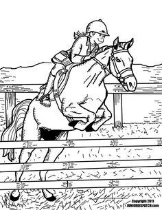 Horses, Horse anatomy and Anatomy on Pinterest