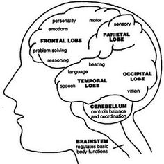 brain function areas within lobes