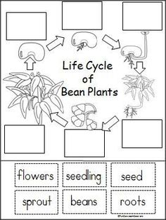FREE Plant Life Cycle Worksheets and Activity Pack