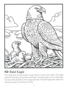 1000+ images about Eagle Crafts / Activities for Kids on