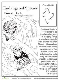 Coloring book download PDF link of Endangered Animals
