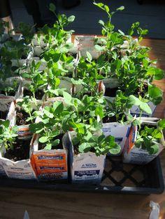 Whole Kids Foundation Resources School Garden Resource Center