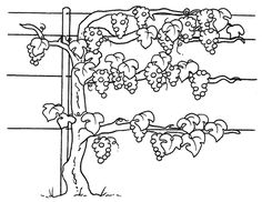 Clipart black and white, Fall leaves and Leaves on Pinterest