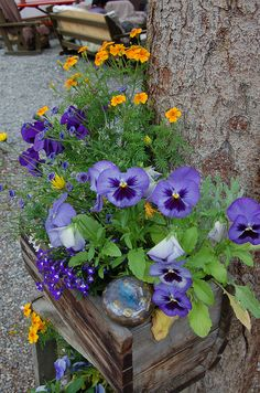 Love The Blue Color Pansies Idea For This Spring In My Tubs