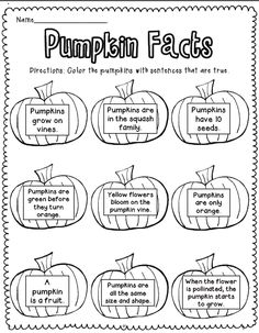 Flying into First Grade: Take a Closer Look....Fall