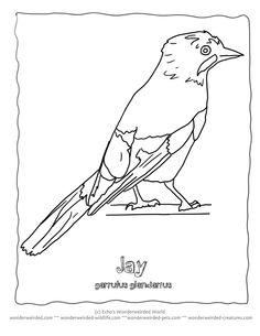 Homeschool Helper Online's Free Identify a Bird Book