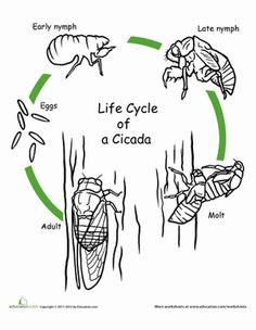 1000+ images about Life Cycles Theme on Pinterest