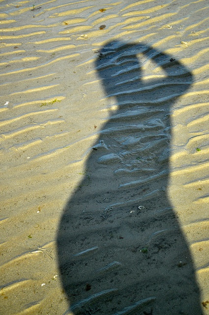 Pregnant shadow- Great Photo Idea