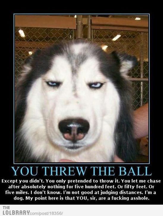 Hahahahahaha! Dog is not amused… but I am.