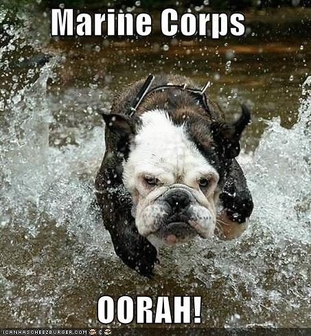 USMC Bulldogs!