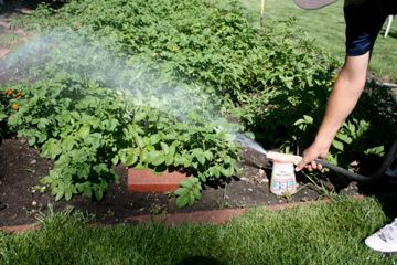Soapy water can help eliminate pests. A comment: When the going gets tough I add