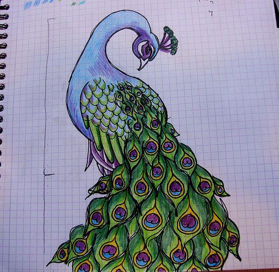 Peacock drawing