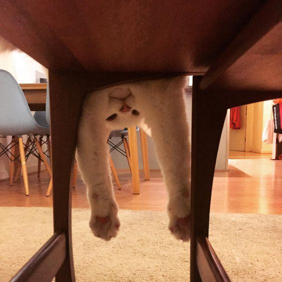 Hi   #catsofinstagram #instacat #derpcat #whitecat #deafcat #tablecat #weirdcat #paws #catpaws: