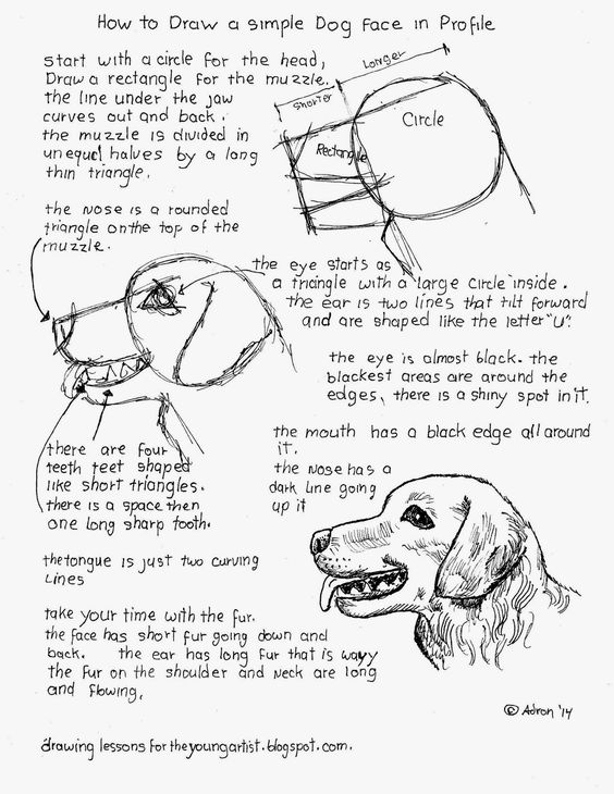 How To Draw A Simple Dog Face In Profile (How to Draw