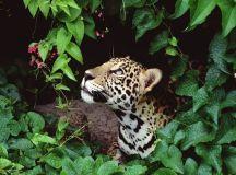 Tropical Rainforest Plants and Animals | Amazon Rainforest ...