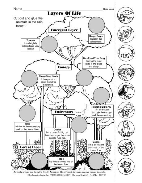 Layers Of The Rainforest Worksheet. Worksheets. Ratchasima