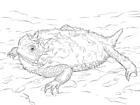 Horned lizard, Lizards and Coloring pages on Pinterest