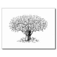 dibujos de arboles bonsai a lapiz