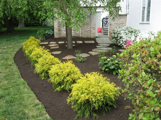 landscaping with golden mop cypress