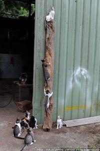 Pole climbing 101 at kitty cat university | Here Kitty ...