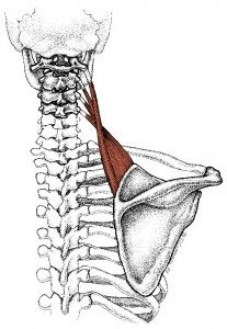 Back pain, Shoulder pain relief and Neck and shoulder pain