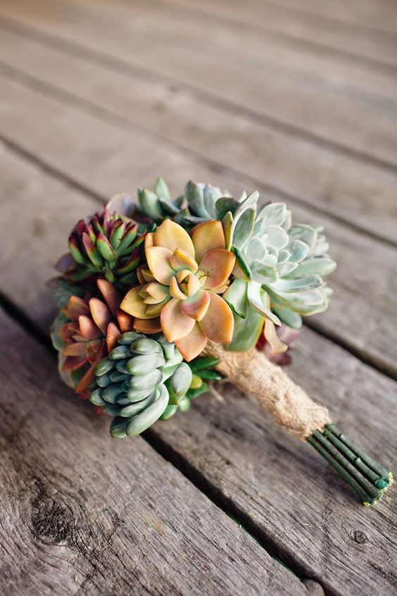 Rosette / Wedding Succulent Cuttings:
