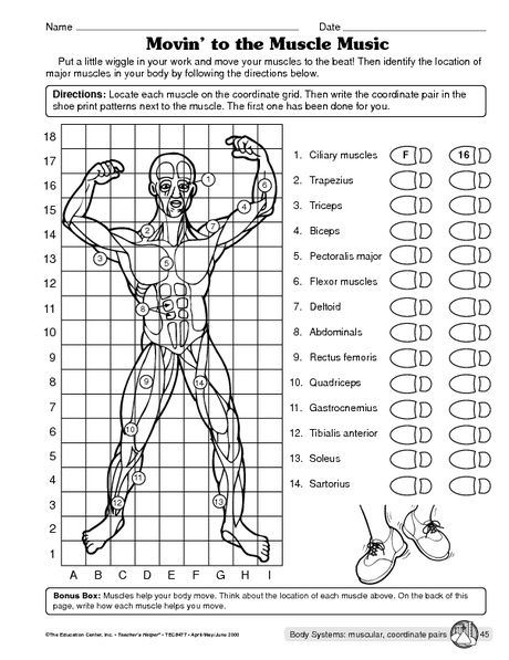 Muscular System Worksheet  Science  Pinterest  The Muscle, Editorial And To The