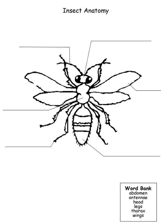 Insects, Worksheets and Homeschool on Pinterest