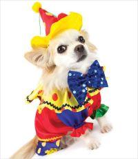 Clown Costume | puppy love | Pinterest | Dog costumes ...