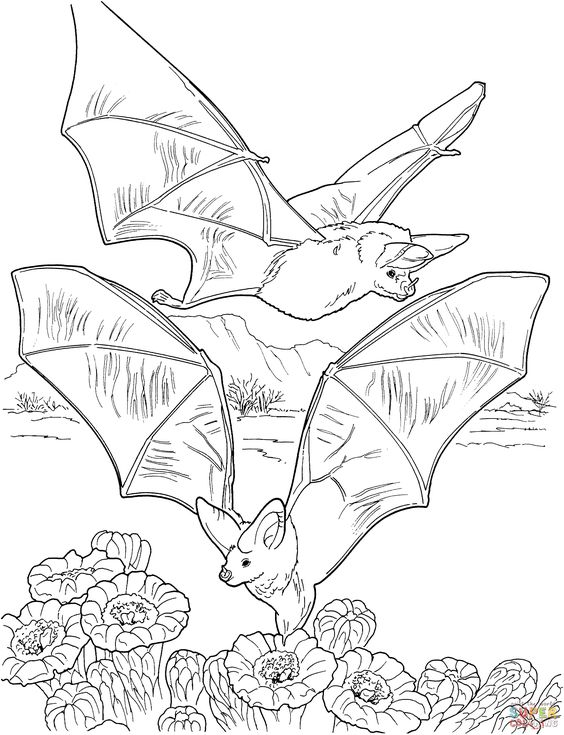 two-bats-gathering-nectar-coloring-page.gif 2,147×2,800