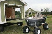 Portable Goose house and Duck Pond | Backyard Chickens ...