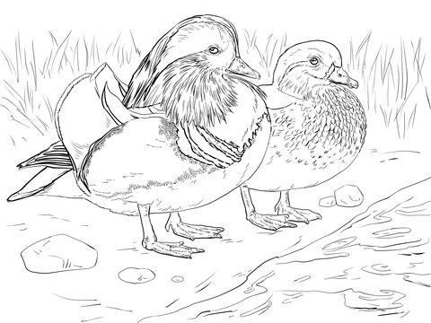 Mandarin Duck Back In Central Park