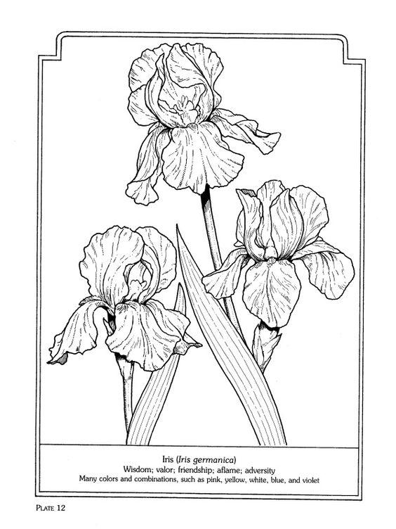 Bearded iris, Language and The o'jays on Pinterest