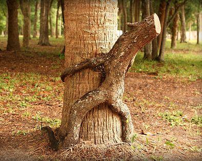 дрвја