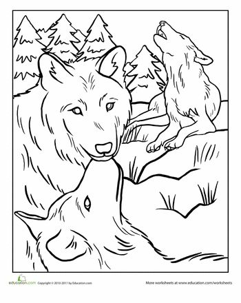 Wolves, Coloring pages and Worksheets on Pinterest