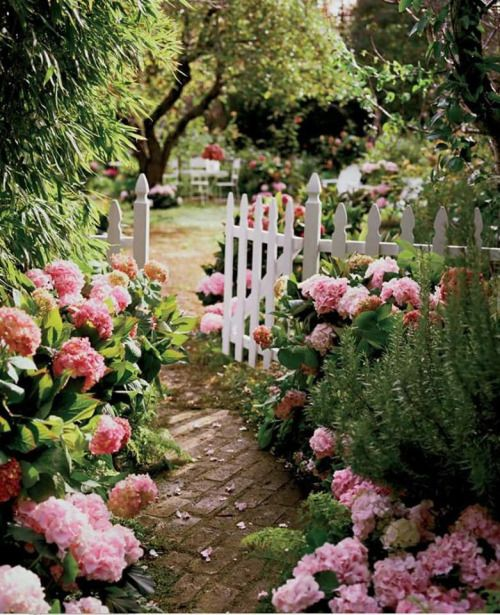 Hydrangeas and white picket fence: