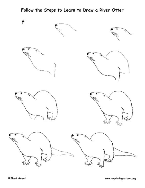 Otter and Draw on Pinterest