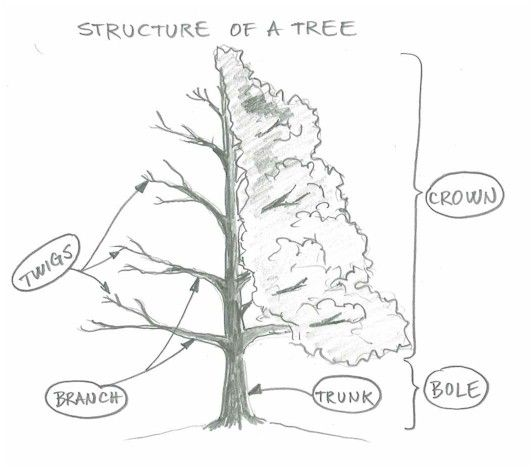 Trees, Other and How to draw on Pinterest
