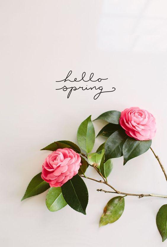 Hello Spring  Magnolia Merryweather: