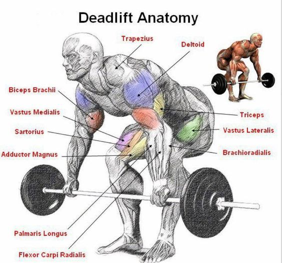 #Deadlifts - the keystone exercise. Nothing more humanly fundamental than picking something heavy off the floor. Hits the majority of major muscle groups. Huge ROI: